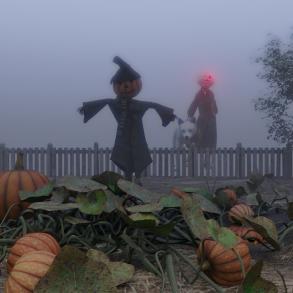 pumpkin-patch5